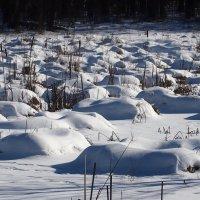 болотные кочки под белой периной :: Александр Прокудин