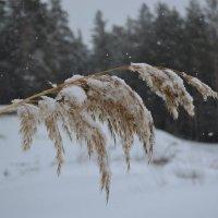 Под снегом :: Елена Рекк