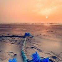 Endangered Species :: Ruslan Bolgov
