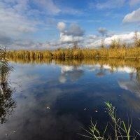 Ноябрь - и воздух уж не тот... :: Павел Петрович Тодоров