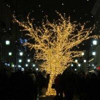 Золотое дерево :: Дмитрий Никитин