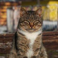 Мартовский кот :: Вадим