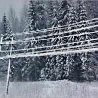 Зима по проводам... :: Кай-8 (Ярослав) Забелин