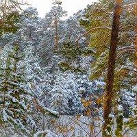 Зимний лес :: Лариса Димитрова