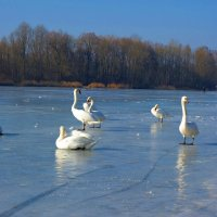 На февральском солнышке... :: Galina Dzubina