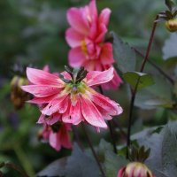 Цветы. :: Алексей Халдин