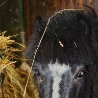 Маленькая пони. :: Paparazzi