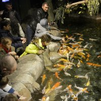 Рыбку можно покормить, сфотографировать и погладить... :: Дмитрий Петренко