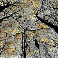 Волшебный лес :: Валерий Розенталь