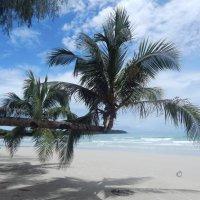 Горизонтальные пальмы - одна из достопримечательностей острова Ко Куд. :: Лариса (Phinikia) Двойникова
