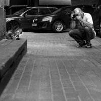 Кадр с одной кошкой :: Татьяна [Sumtime]