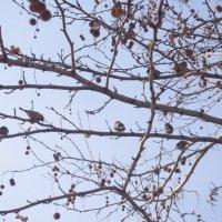 весна :: İsmail Arda arda