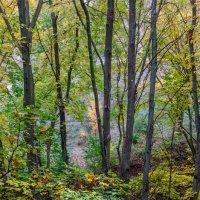 Осенний лес :: Александр Березуцкий (nevant60)