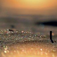 песок :: Лилия .
