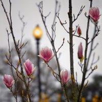 Скучаю по весне… :: Roman Mordashev