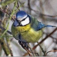 И птицы солнцу рады! :: Вячеслав Минаев