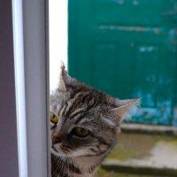 мама моет окно слишком рано,а оно воняет! :: Роза Бара