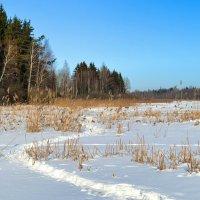 Тропа рыбаков по льду замёрзшего озера :: Милешкин Владимир Алексеевич