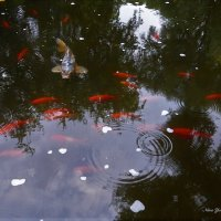 Рыбки :: Nina Yudicheva