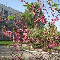 Весна :: Ирина Диденко
