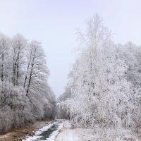 Зимние кружева. :: Андрий Майковский