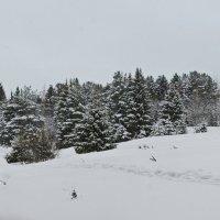 последние штрихи зимы :: Svetlana Plasentsiia