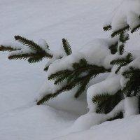 Ещё снега, еще морозно.... :: Tatiana Markova