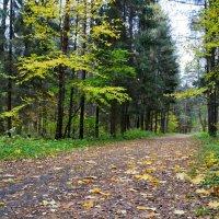 Жёлто - зелёная осень :: Милешкин Владимир Алексеевич