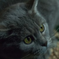 У страха глаза велики :: Елена Яшнева