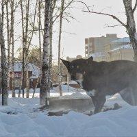 Пёс. :: Виктор Соколов