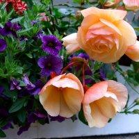 Городские цветы (серия). Бегония :: Nina Yudicheva