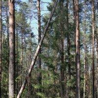 В лесу :: Татьяна Панчешная