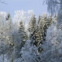 Холодно! :: Александр Петров