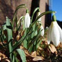 За 3 дня до весны...)) :: Galina Dzubina