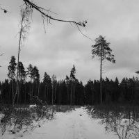 Зимнее настроение. :: Владимир Лазарев