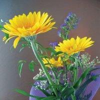 Цветы :: veera (veerra)