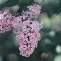 просто захотелось уже весны... :: Оксана Онохова