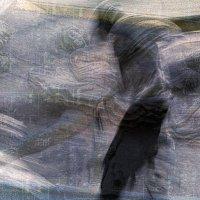 танго чёрная каракатица :: Алексей Карташев