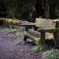 Скамейка в лесу :: Alena Nuke
