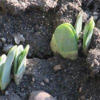 Весна идёт, весне дорогу! :: Вячеслав Медведев