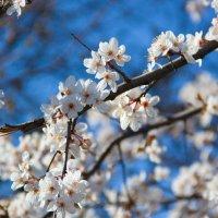 весна :: Oksana Verkhoglyad