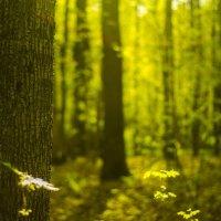 Молодая зелень вековых деревьев :: Александр Манзюк