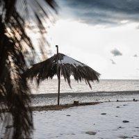 Зимний пляж Абхазии :: Алексей Петренко