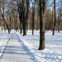 Зима в парке... :: Тамара (st.tamara)