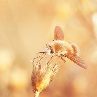 последние дни лета :: Андрей Куницын