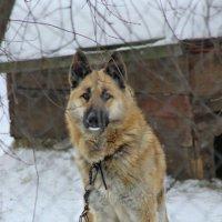 Красивый пес.. :: Galina ✋ ✋✋