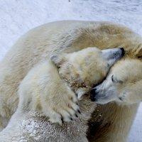 Медвежьи обнимашки :: Елена Баландина