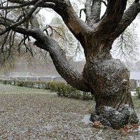 Дерева вы мои, дерева... :: Ольга