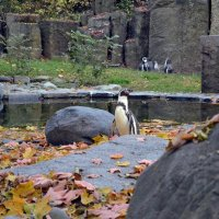 Осень для пингвинов :: Ольга