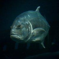Грозная рыбка... :: Дмитрий Петренко